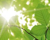 Sonne bricht durch grünes Blätterdach